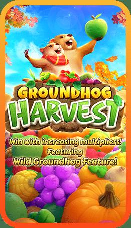 เกมสล็อต Groundhog Harvest